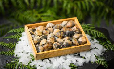 Almeja japónica